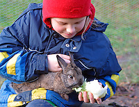 Mädchen füttert Zwergkaninchen, Zwerg-Kaninchen auf dem Arm mit Salat, dwarf rabbit