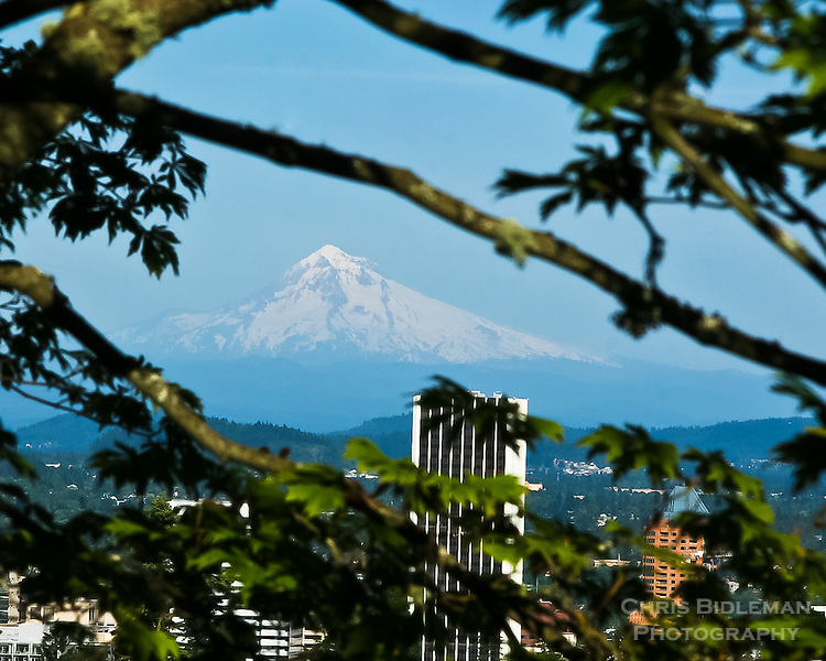 Mt Hood (11239 feet) towers over the skyline of Portland, OR framed by a Japanese Maple in the Portland Japanese Garden.  Selected as May 2011 calendar picture of official garden calendar available in the gift shop and on-line.