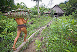 Teu Paksa, dressed in a loin cloth, carries a pig bound in sago leaf to his traditional house (uma).