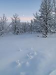 Venabygdsfjell, early winter, soft light