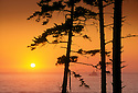 Sunset through trees at Ecola State Park, with Tillamook Rock Lighthouse offshore; .northern Oregon coast.
