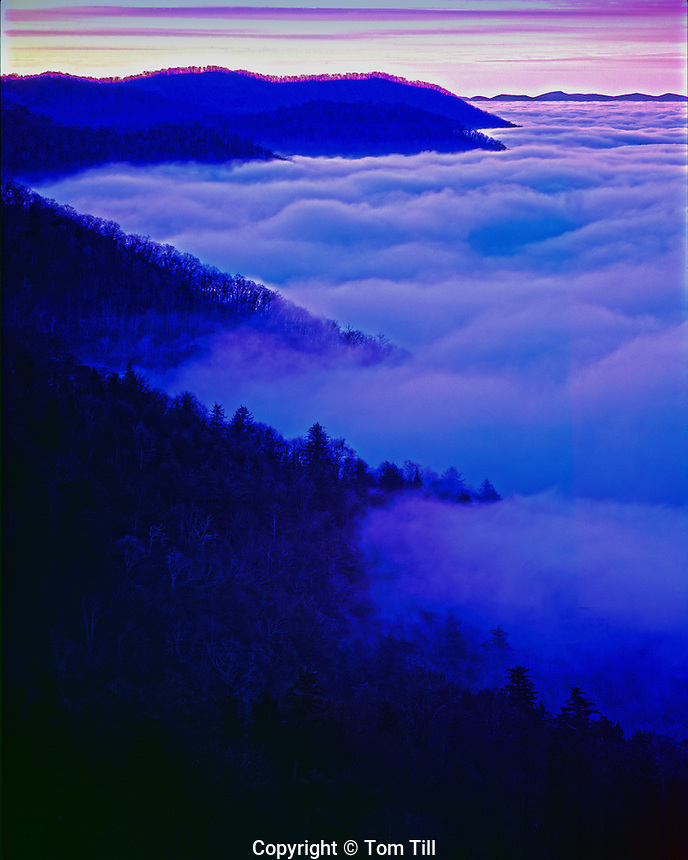 Fog at dawn, Great Smoky Mountains National Park, North Carolina, Southern Appalachians, Newfound Gap, January