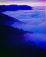 Fog at dawn, Great Smoky Mountains National Park, North Carolina, Southern Appalachians, Newfound Gap, January