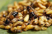 Bee larvae is served at the Dai Meng Mou Restaurant in Ruili, Yunnan province, southwestern China.