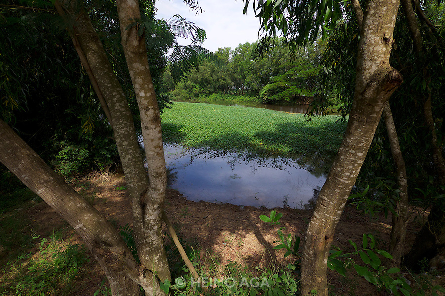 Phnom Penh, Cambodia. A pond at Choeung Ek Killing Fields memorial site, a reminder of the genocide committed by the Khmer Rouge.