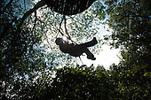 Woman siloutted as she Zip-lines through the air and rainforest with Kohala Ziplining in North Kohala on the Big Island.