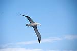 Antractic Peninsula Wildlife & Landscapes