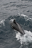 Stock photo of a bottle nose dolphin Stock photo of bottlenose dolphin