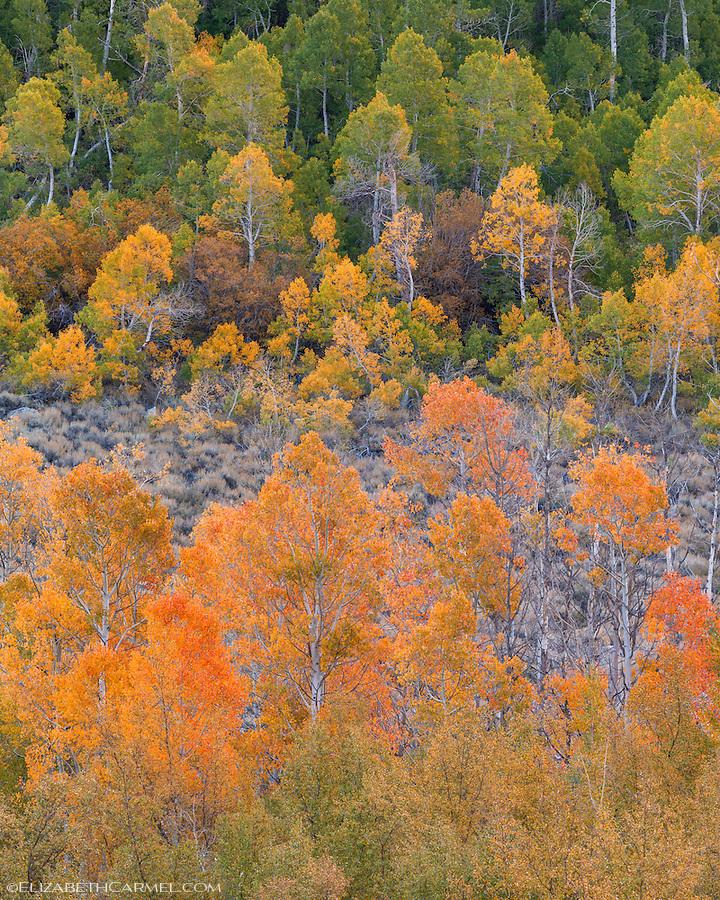 Autumn Glow, HIgh Sierra