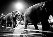 elephants walk through downtown Los Angeles, California