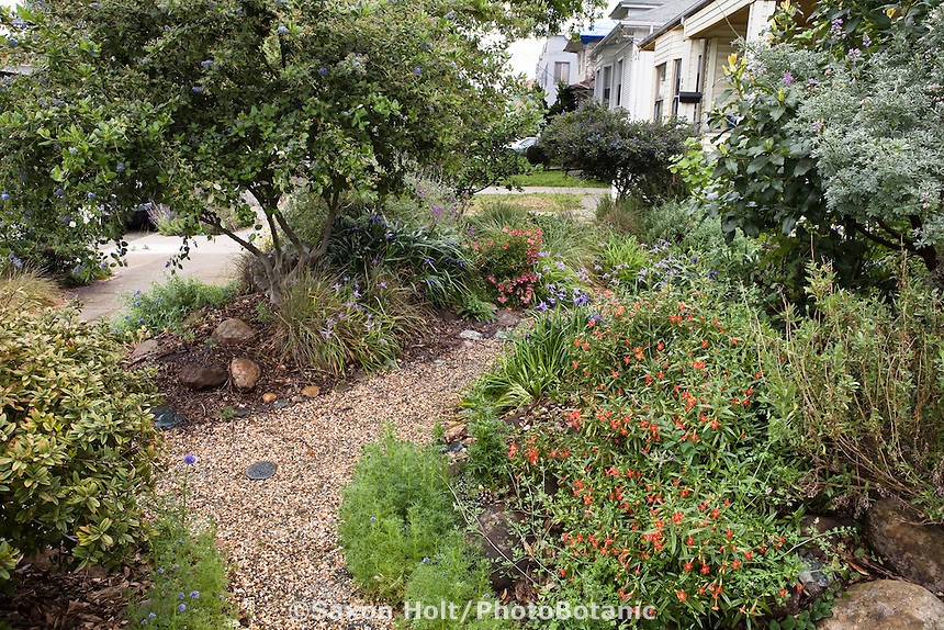 A mix of California Native Plants and Garden Images – California Native Plants for the Garden