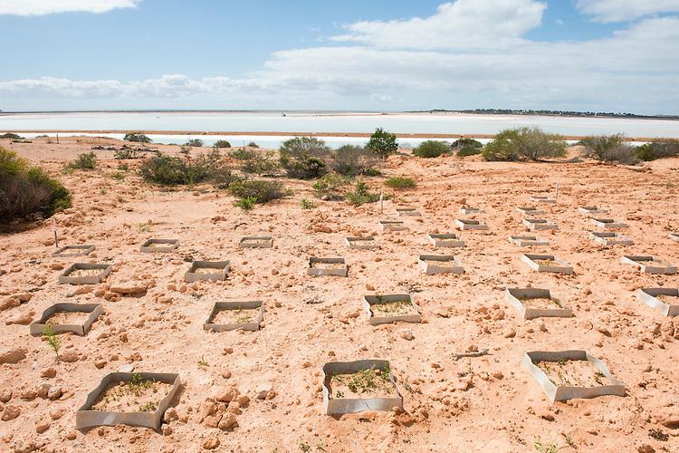 Shark Bay Salt Pty Ltd wa Pit at Shark Bay Salt