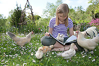 Mädchen sitzt im Garten und liest, neugierige Hühner und Küken gucken zu, Zwerghuhn, Zwerghühner, Idylle, Landidylle