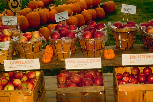 Farmers market in fall New England