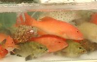 Hong Kong Coral Fish