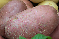 Red potatoes 'Sarpo Mira' Solanum reddish