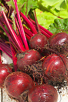 Beetroot Boltardy Beta Vulgaris Root Vegetable Crop