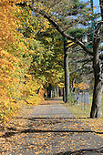 Tree lined pedestrian path in Joliette Quebec ,  with leaves turning yellow in late fall day, Vertical image