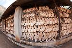 .Storage for Elephant jaws and rhino skulls.