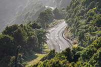 Great Coastal Road near Punakaiki, Paparoa National Park, West Coast,  Buller Region, New Zealand, NZ