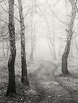 Twisting route through woodland in winter with fog