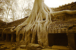 Infrared Image of Roots at Ta Prohm, Cambodia