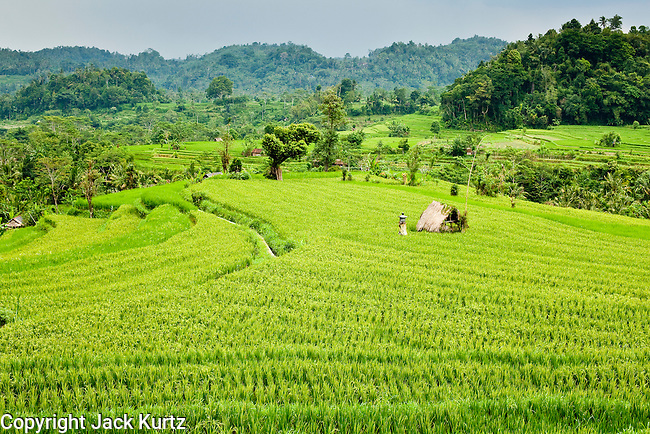 Apr 23 - BALI, INDONESIA - Rice terraces in the mountains of Bali. Rice is an integral part of the Balinese culture. The rituals of the cycle of planting, maintaining, irrigating, and harvesting rice enrich the cultural life of Bali beyond a single staple can ever hope to do. Despite the importance of rice, Bali does not produce enough rice for its own needs and imports rice from nearby Thailand. Photo by Jack Kurtz/ZUMA Press