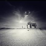 A little girl walking towards in a desert with an elephant