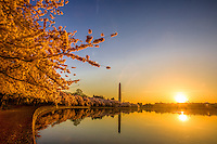 Washington Monument Cherry Blossoms Tidal Basin Washington DC