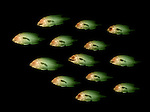 X-ray image of a school of fish (green on black) by Jim Wehtje, specialist in x-ray art and design images.