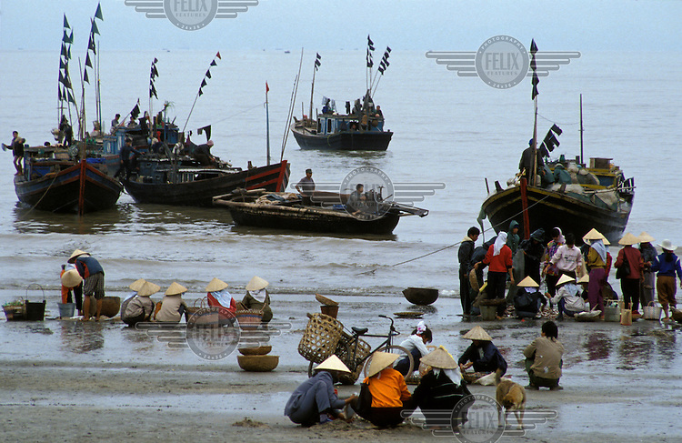Fishing fleet off-loading their catch for sorting and sale.