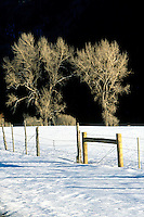 ICE AND SNOW<br /> Snow w/ Cottonwood Trees<br /> Telluride, CO