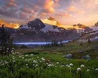 A wildflower laden meadow and huge glacier at sunset in the Coast Mountains.