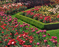 Rose Garden in Peninsula Park Portland Oregon