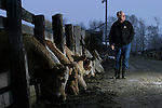 Lawrence Kluthe with some of the 600 head of cattle on his farm 45 min. North of Edmonton on October 31, 2003.  .John Ulan/The Globe and Mail