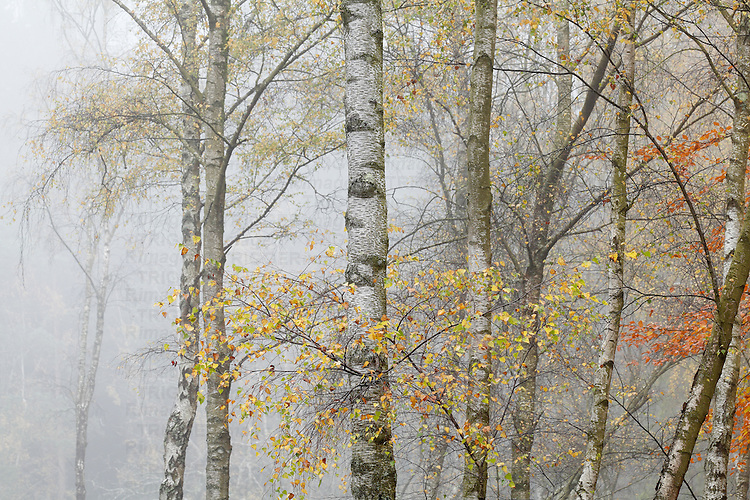 Autumn rural countryside landscapes with fog and mist amongst trees