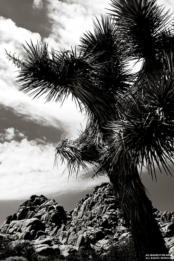 Images from Joshua Tree National Monument.