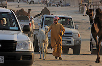 Million Road is crowded with camels and cars as owners and trainers proudly parade their animals for all to see. A man leads a baby camel through the chaos of four wheel drive vehicles.