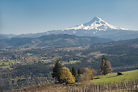 Mt. Hood & vineyards