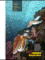 Publication in Asian Diver, pharaoh cuttlefish at iconic dive site Richelieu Rock, Thailand.