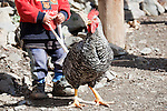 Little boy goes for a walk with a hen, High Atlas Mountains, Morocco.