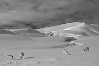 Spitsbergen reindeer landscape