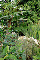 Plant History Glasshouse (formerly Australian Glasshouse), 1830s, Rohault de Fleury, Jardin des Plantes, Museum National d'Histoire Naturelle, Paris, France. Low angle view of cyatheales with Equisetum myriochaetum plants on the right of the picture and rocks in the foreground.
