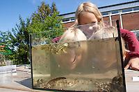 Grundschulklasse, Schulklasse im Schulgarten an ihrem selbst angelegtem Schulteich, Schul-Teich, Gartenteich, Garten-Teich, Kinder haben Tiere aus dem Teich gefangen und beobachten diese in einem Aquarium, Exkursion am Teich, Biologie-Unterricht im Freien, Grünes Klassenzimmer, Tümpelaquarium, Tümpel-Aquarium