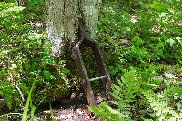 "Tree growing around an artifact along a spur line of the old East Branch & Lincoln logging Railroad (1893-1948) in the Pemigewasset Wilderness of Lincoln, New Hampshire. This metal bracket was bolted to each end of a ""Reach"". A reach was a spruce beam used to connect loaded log trucks."