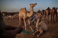 AGADEZ, NIGER &mdash; <br /> Camel traders, merchants and livestock sellers gather at the local market in Agadez. <br /> <br /> Agadez, is the largest city in central Niger with an estimated population of over 120,000 people. This city, comprised mainly of one-story mud structures, is situated on the southern outskirts of the Sahara desert and has been an important trade center for centuries. Tuareg and Berber tribes have traveled the many commercial routes that run through the desert for more than a thousand years. Today, this city has become one of the largest human smuggling and drug trafficking routes in West Africa. Thousands of migrants attempting to reach Europe are smuggled through the Sahara desert to Libya, Algeria and Morocco in their attempts to reach Italy and Spain.