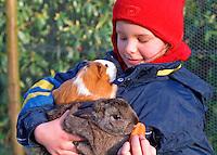 Mädchen mit Zwergkaninchen, Zwerg-Kaninchen und Meerschweinchen- Meer-Schweinchen auf dem Arm, dwarf rabbit and guinea-pig