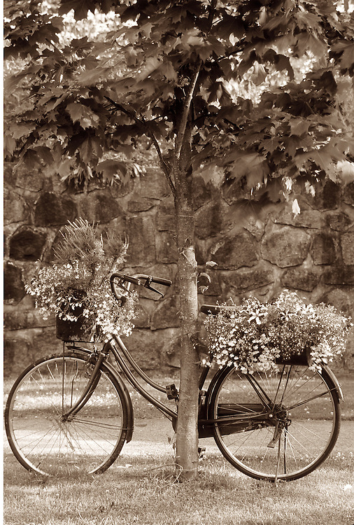 Old bicycle recycled for displaying flower pots in front of stone wall of heritage home in Vancouver
