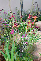 Iris, Gladiolus, Sambucus shrub in flowers, Fennel, Circium, Galdiolus, with patio and wall, ornamental grasses in puurple and orange color theme garden mixture of bulbs, perennials, grass