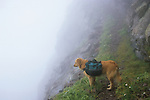 Dog on the edge of Phantom Terrace in the clouds, Sangre de Cristo Wilderness, San Isabel National Forest, Colorado